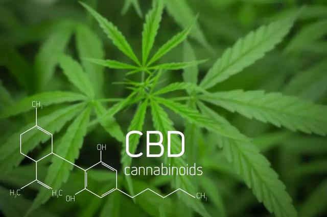 FDA拒绝了Charlotte's Web公司将大麻二酚作为膳食补充剂销售的申请